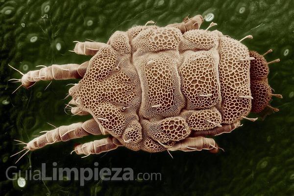 ¿Se pueden eliminar los ácaros del polvo?