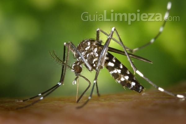 Parches, brazaletes y camisetas antimosquitos
